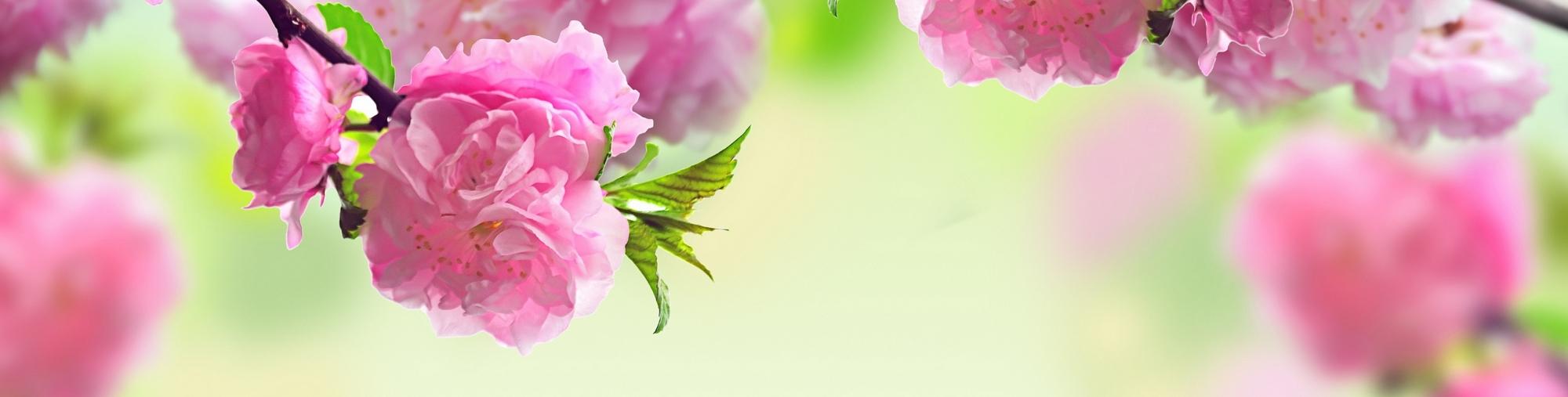 893373-spring-flowers